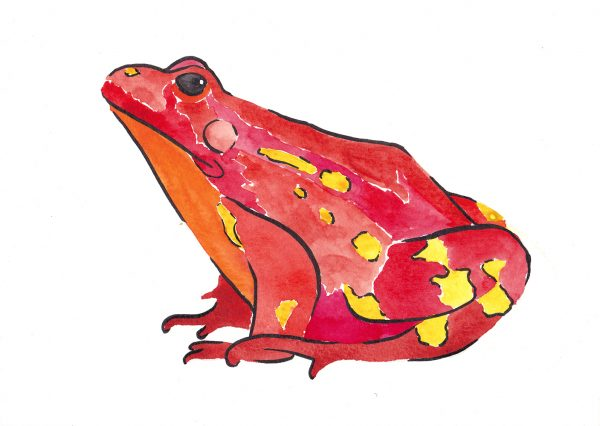 Aquarell - roter Frosch